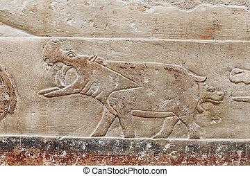 egipto, necropolis, saqqara, escenas, el cairo