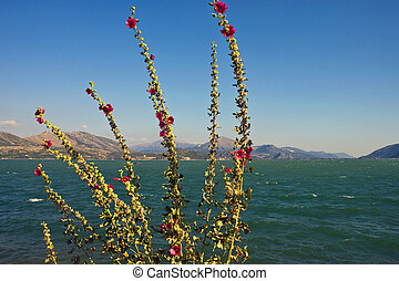 Egirdir lake with flowers, Turkey