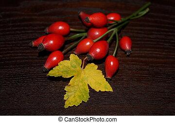 Eglantine, rosehip