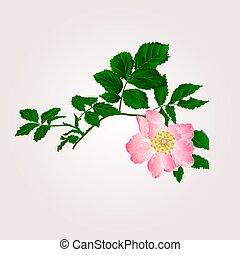 Eglantine vector - Eglantine twig with leaves and flower of ...