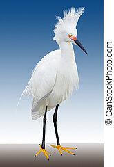 egret, 雪が多い