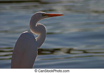 Egret #1