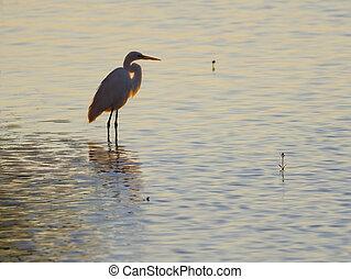 Egret at Dusk