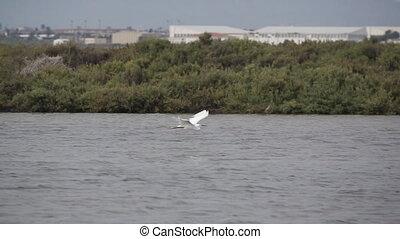 Egret flying in super slow motion