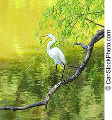 egret, glied, großes weiß, gesetzt