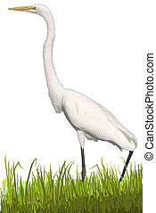 egret, grand