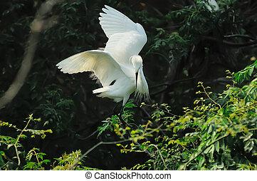 Egret in the wild