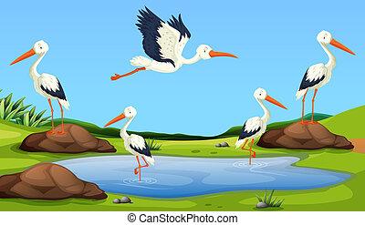Egret migration to the pond illustration
