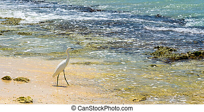 Egret on sea shore - Egret on the shore of the sea water ...