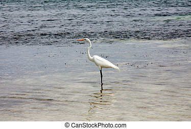 Egret on the sea