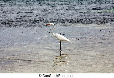 Egret on the sea