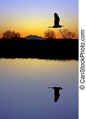 Egret Over Pond - Golden Silhouette of White Egret Flying...