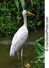 Egret - Photography of egret in the wetland