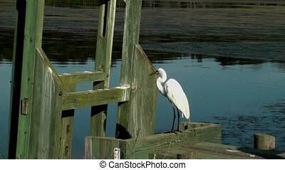 Egret preening with a small bird flying up next to it