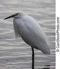 Egret standing in water