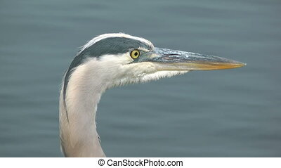 Egret Bird Close-up