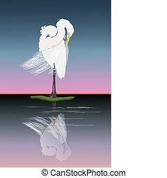 egret - Graceful Great egret grooming at sunrise.