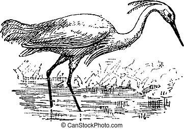 Egret, vintage engraving. - Egret, vintage engraved...
