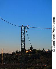 Egrets resting on electricity pylon - Three lesser egrets ...