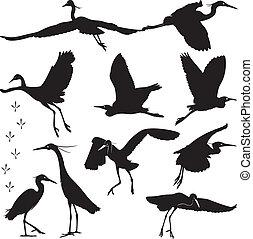 Egrets Silhouettes Illustration