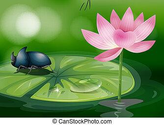 egy, bogár, felül, a, waterlily