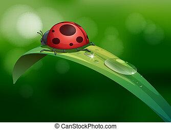 egy, bogár, felül, egy, hosszú, levél növényen, noha, dews