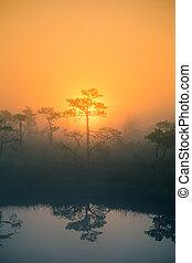 egy, gyönyörű, álmodozó, reggel, táj, közül, nap, felkelés, alatt, egy, ködös, swamp.