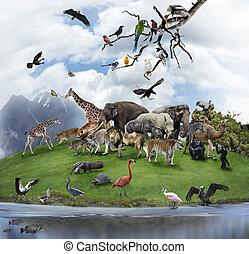 egy, kollázs, közül, vad állat, és, madarak