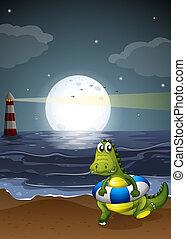egy, krokodil, tengerpart