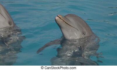 egy, lövés, közül, delfinek, úszás, mindenfelé