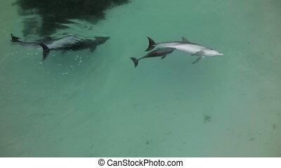 egy, lövés, közül, delfinek, játék együtt