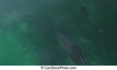 egy, lassú mozgás, lövés, közül, delfinek