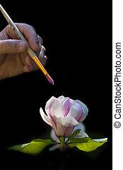 egy, művész, fest, egy, magnólia, virág, képben látható, egy, black háttér
