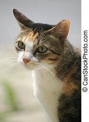 egy, macska, noha, éles, látás
