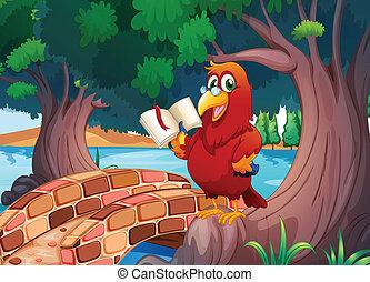 egy, piros, papagáj, olvas előjegyez
