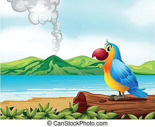 egy, színes, papagáj, tengerpart