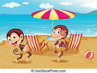 egy, tengerpart, noha, két, majmok