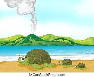 egy, vulkán, tengerpart, és, teknősbékára halászik