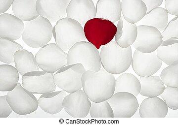 egyedülálló, egyedül, piros, szirom, között, fehér, motívum