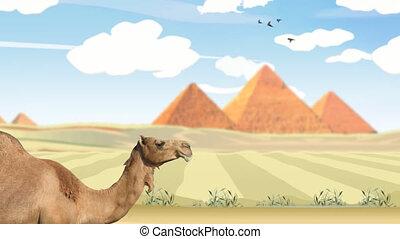 egypt desert - a travel through deset, with pyramids in...