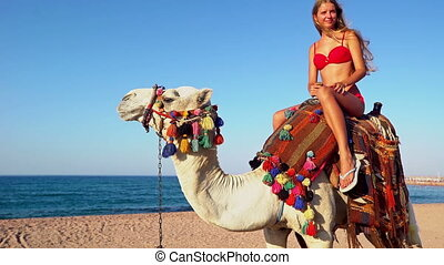 Egypt holiday with camel riding back for young woman - Egypt...