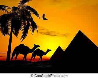 egypte, coucher soleil, désert