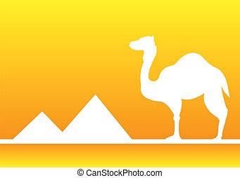 egypten, öken, kamel