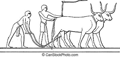 Egyptian Plough, vintage engraving.