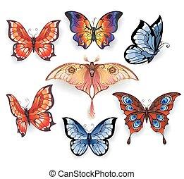 egzotikus, állhatatos, pillangók, fényes
