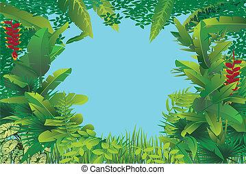 egzotikus, esőerdő