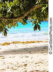 egzotikus, tropical tengerpart, noha, türkiz, víz