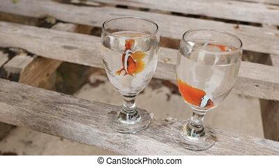 egzotyczny, fish, pływak, philippine, dwa, klown, idea, wodowskaz, puchary, coast., ślub, para., exotic.