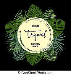 egzotyczny, lato, liście, tropikalny, dłoń, tło, plants.