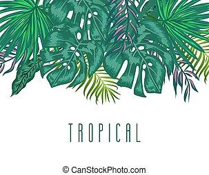 egzotyczny, lato, liście, tropikalny, zielone tło, dłoń, ...